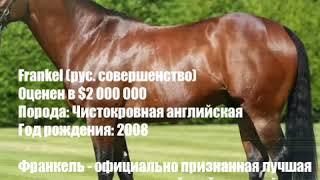 Самая дорогая лошадь в истории (краткое описание)