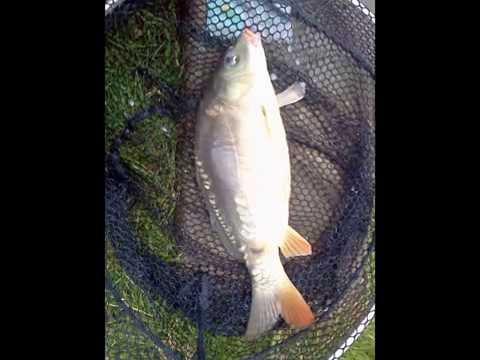 The Fish I Caught At Tern Fisheries Market Drayton Last Summer