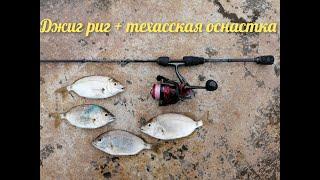 Морская рыбалка Ласкирь на джиг риг и техасскую оснастки