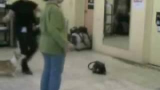 Движение собак в ринге с разной скоростью.(, 2010-02-23T11:30:03.000Z)