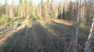 Традиционная русская охота с гончими по чернотропу на зайца.