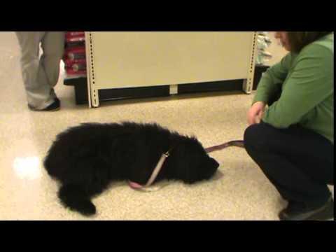 Puppy training - Basics 'Stay' (2009)