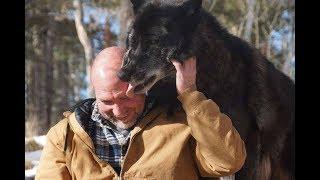 Волк готов был отдать жизнь за своего хозяина и спас его из горящего дома!