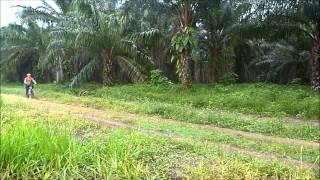 Trilha do dendê 2015 - Igarapé-Açú