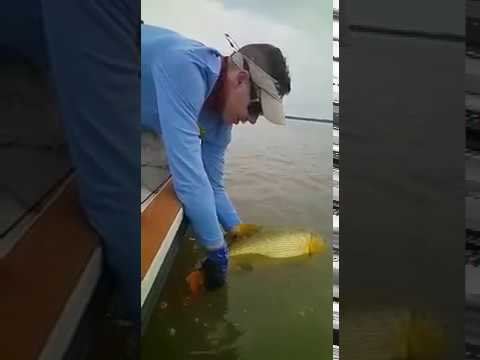 Pescaria em Goya, Argentina - Dourado Bus 05/09/2017