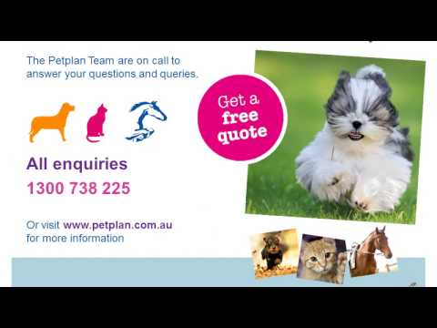 Petplan Immediate Veterinary Cover for Pets - Presentation