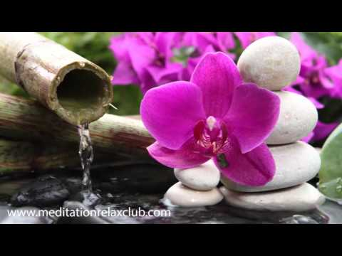 3 HOURS Japanese Zen Garden Music: 50 Shades of Relaxation M