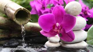 3 HOURS Japanese Zen Garden Music: 50 Shades of Relaxation Music buddha