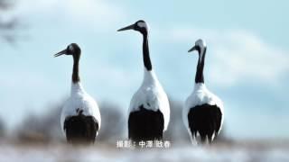 野鳥写真集  -鼓動- PR動画