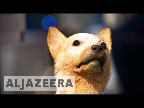Laika the space dog 60 years on