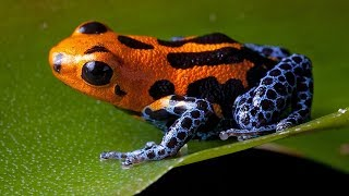 10 Most Dangerous Frogs