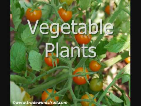 Different types of plants youtube for Different kinds of plants