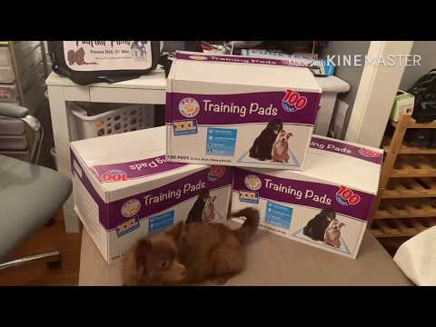 Disposable Puppy Pads/Reusable Puppy Pads