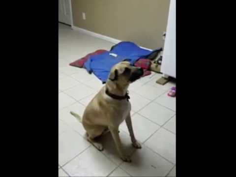 Video of adoptable pet named Moses
