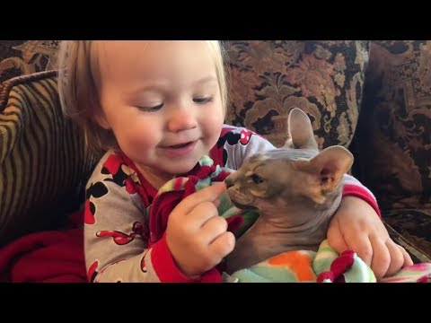 FUNNY CATS AND BABIES PLAYING TOGETHER 😽😽😽 Funny Babies and Pets