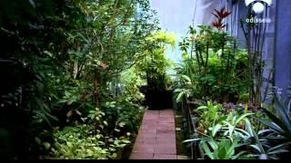 En la Mente de las Plantas, Biología y Comunicación
