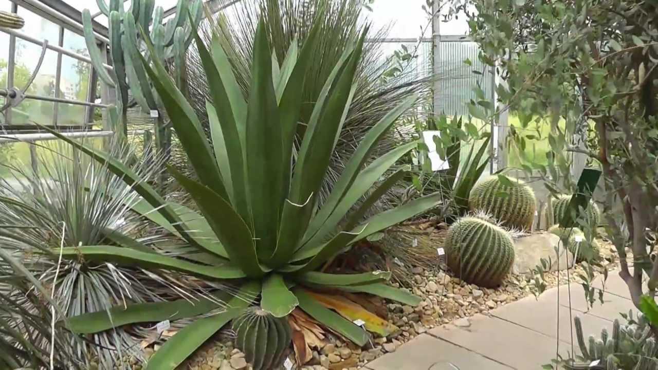 Botanischer Garten Dresden - YouTube