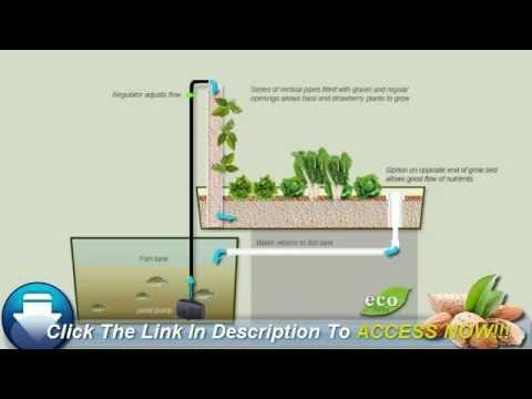 Aquaponics For Beginners Youtube