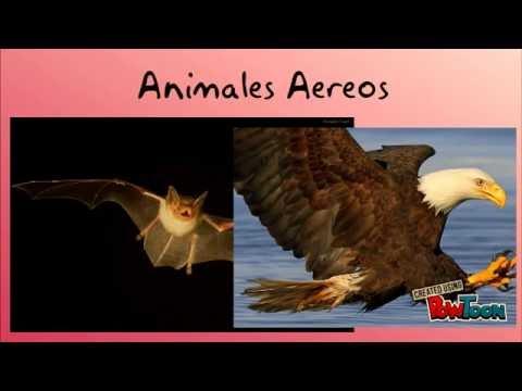 animales terrestres - photo #27