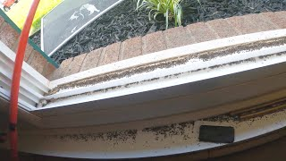 Infested with 100,000's of Sewer Flies - Drain Pros Ep. 68