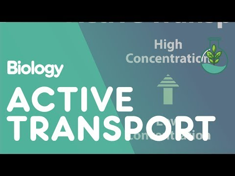 Transport in Cells: Active Transport | Biology for All | FuseSchool