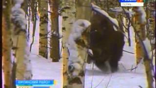 Мини-зоопарк в Юрлинском районе