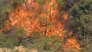 Australia Bushfire: Threat Of 'Mega Fire' In New South Wales