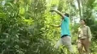 Kỹ thuật thu hoạch cây mây nếp