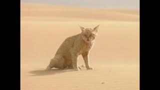 Animaux du désert : La vie dans les vagues de sables - Vidéo COMPLETE thumbnail