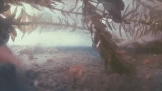 DOLF And Weird Genius• Dreams (feat.Rochelle) | Audio