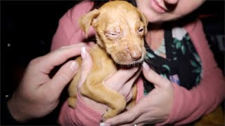 rescuing-puppies-abandoned-by-mother
