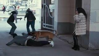 Собака спасла жизнь | Короткометражный фильм со смыслом.