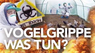 Vogelgrippe 2016 - Stallpflicht! Was tun als Geflügeldude? | Heimwerkerking Fynn Kliemann