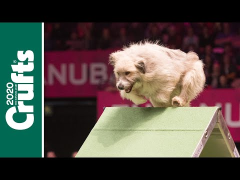 Try not to laugh! It's the best Crufts bloopers!