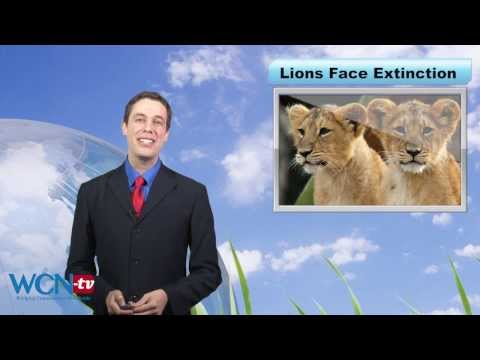 WCN-tv Earth Report: West African Lion in Trouble ENG