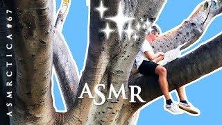 ASMR What Do Tingles Feel Like? | Tree Bark Tapping | Rambling