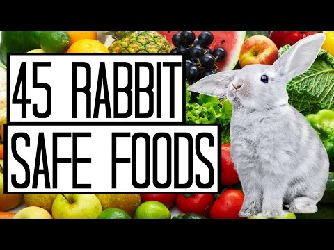 45 Rabbit Safe Foods