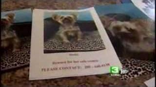 Burglars Steal Dog