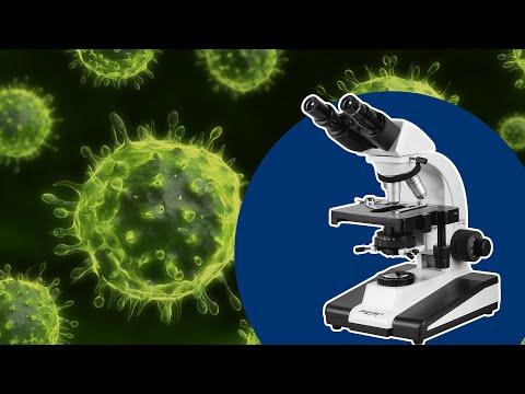 تطور علم الفيروسات 🔬🦠