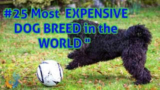 Top 25 Most Expensive Dog Breed in the World | JJ TV #doogbreeds