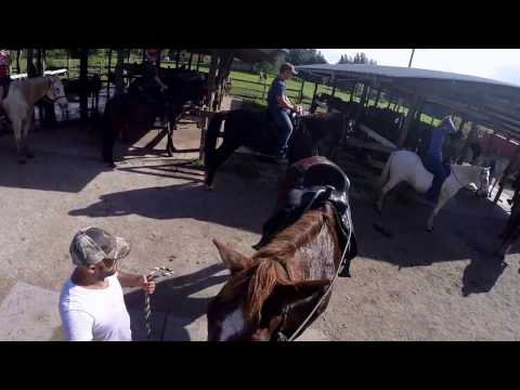 Horse Riding Bar B Ranch, Davie, FL 2017