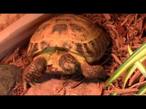Everything You Need For Your First Tortoise