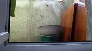 Кот выглядывает из-за окна смешно очень