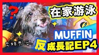 【????MUFFIN「反」成長記#4】和狗狗在「家中游泳」????????♀️?享受還是會逃走?????(中字)