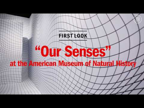 "First look: ""Our Senses"" at the American Museum of  Natural History"