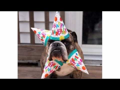 The 45 Birthday Wishes for Dogs | WishesGreeting