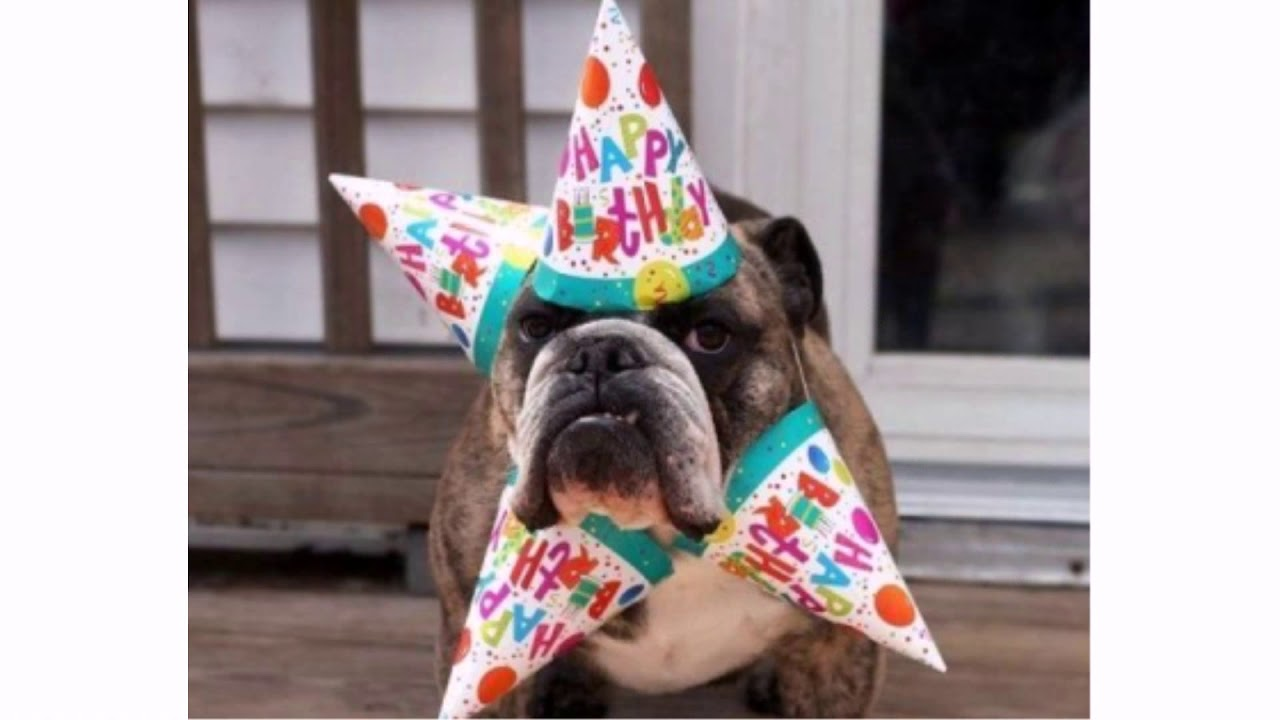 The 45 Birthday Wishes For Dogs Wishesgreeting