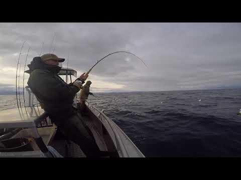 Vesterålen 2017 (Nicolai Würfel - Fisherman) Hvidovre sport