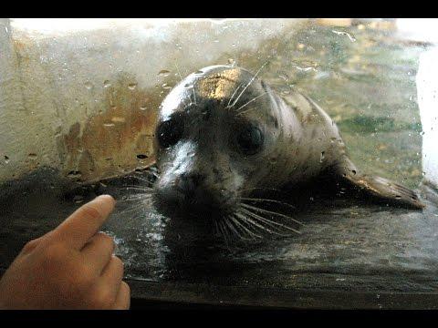 Feeding Harbor Seals At The Seaside Aquarium