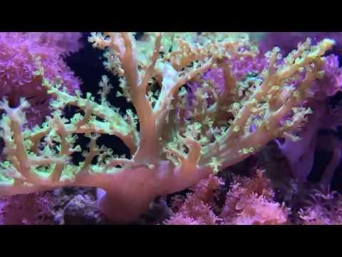[4K] 10 Gallon Nano Reef Tank Fully Stocked - Day 589
